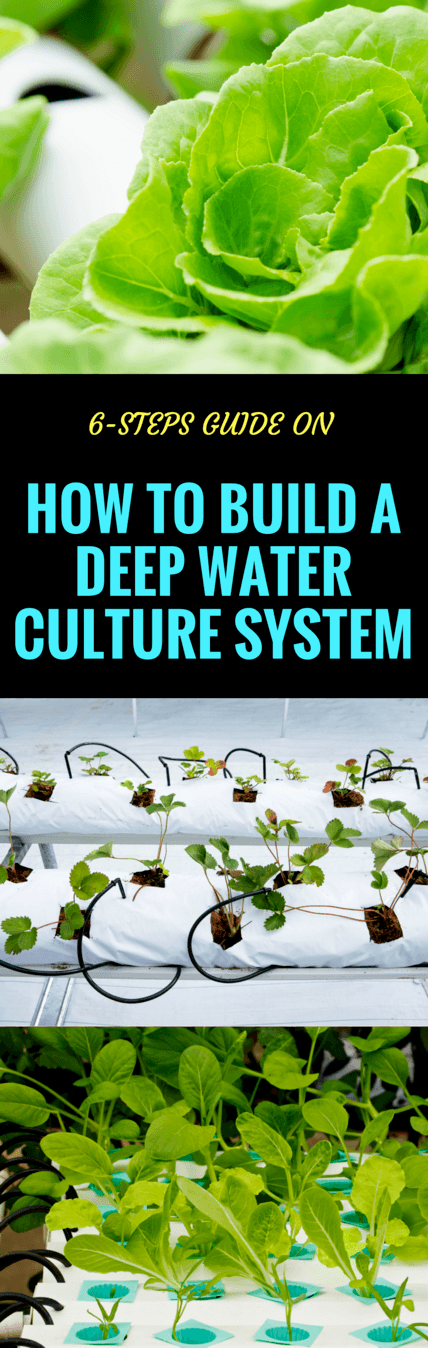 how to build a deep water culture system pin it