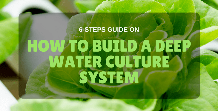 how to build a deep water culture system