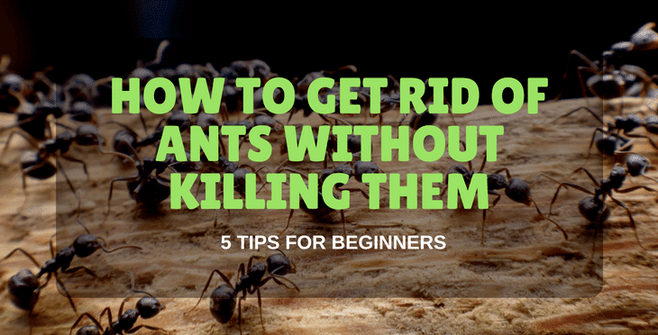 how to get rid of ants without killing them (2)
