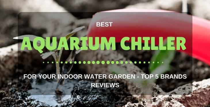 Best Aquarium Chiller Reviews (For 10, 20, 55 Gallon Tank)