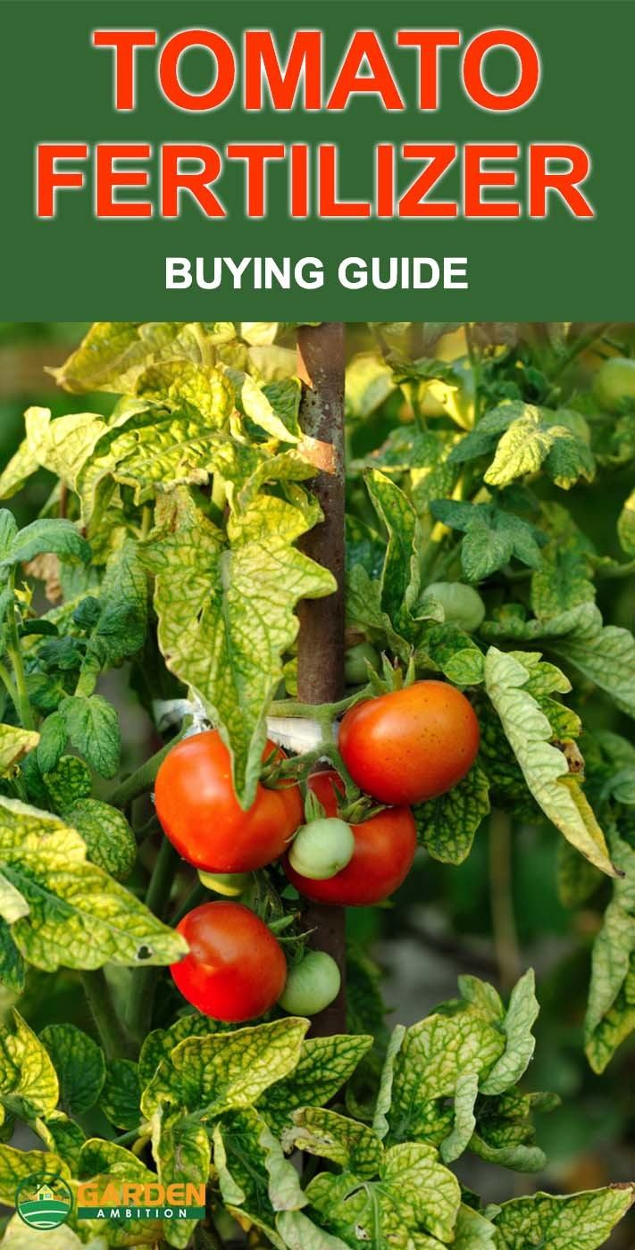 Best Fertilizer For Tomatoes Reviews