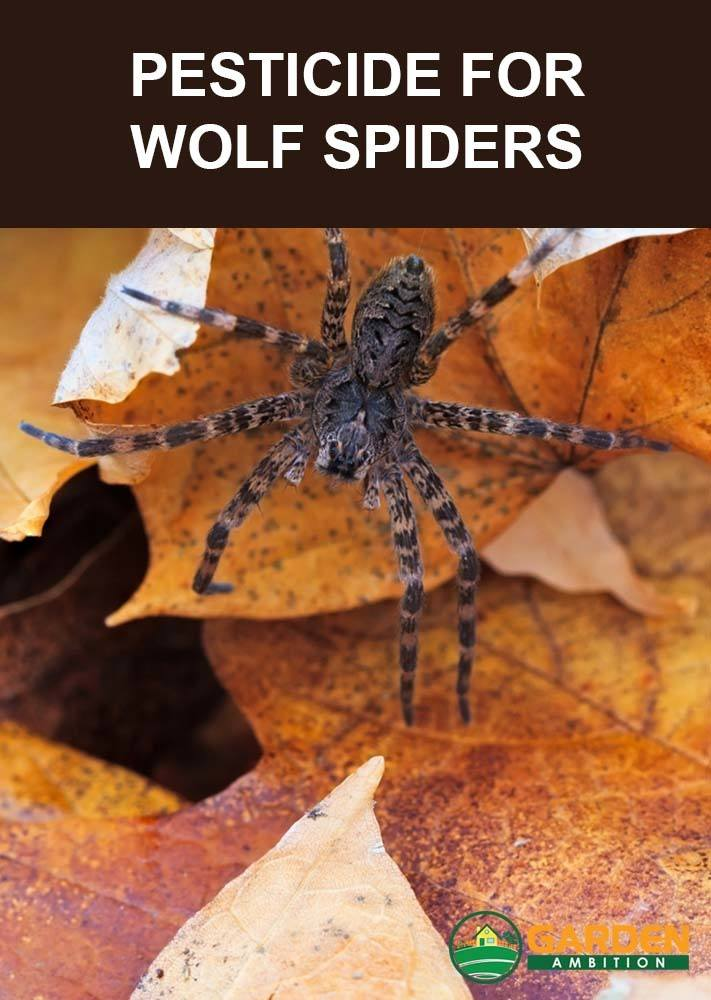 best pesticide for wolf spiders