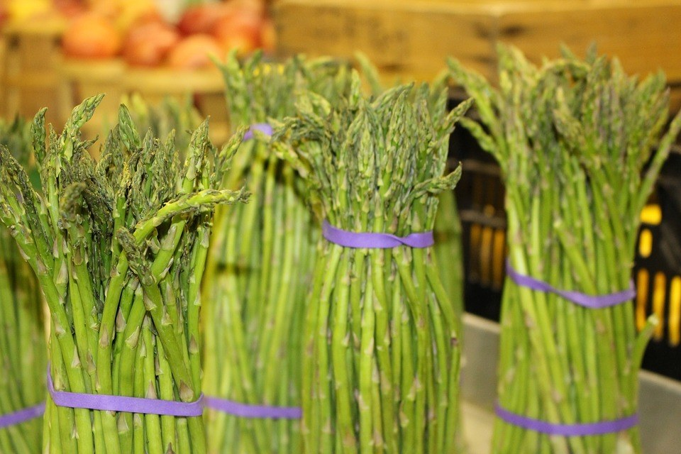 Locally-grown Bundled Asparagus after successful growing asparagus