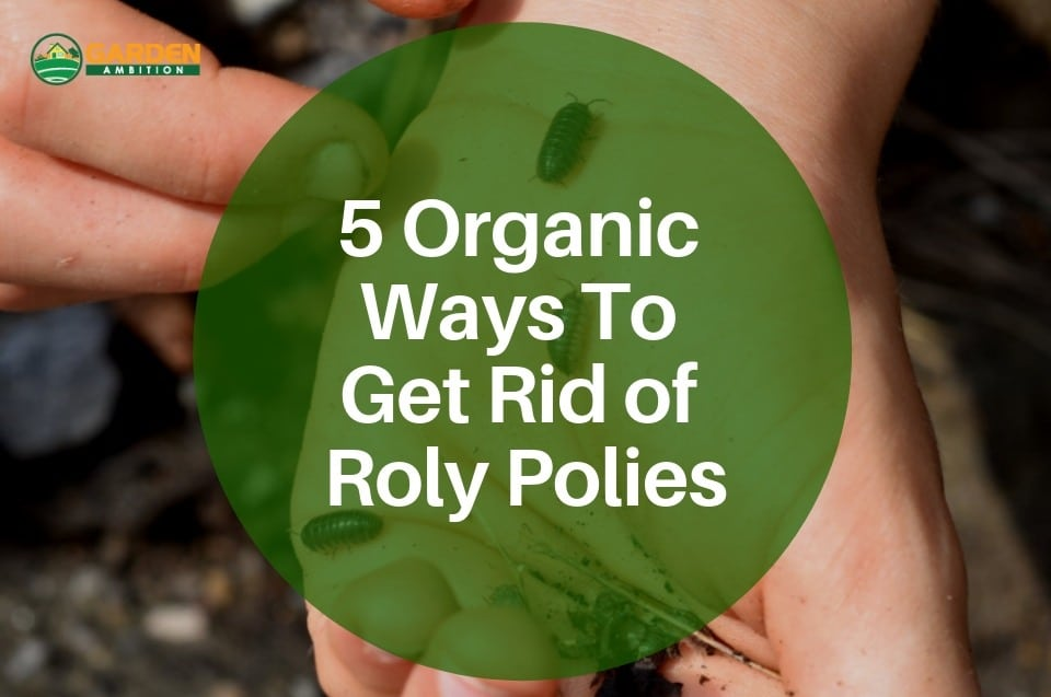 5 Organic Ways To Get Rid of Roly Polies