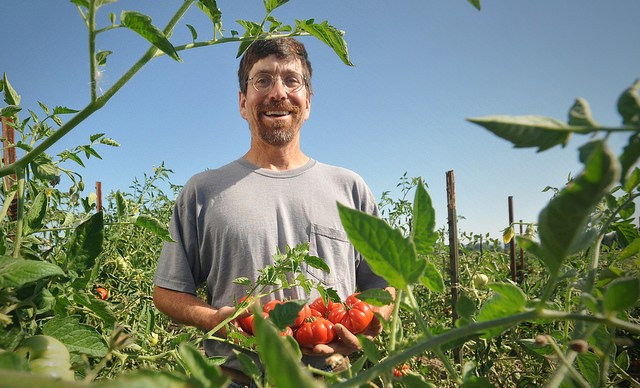 Oregon Certified Organic Farmer showing an organically-grown tomato after successful planting tomatoes