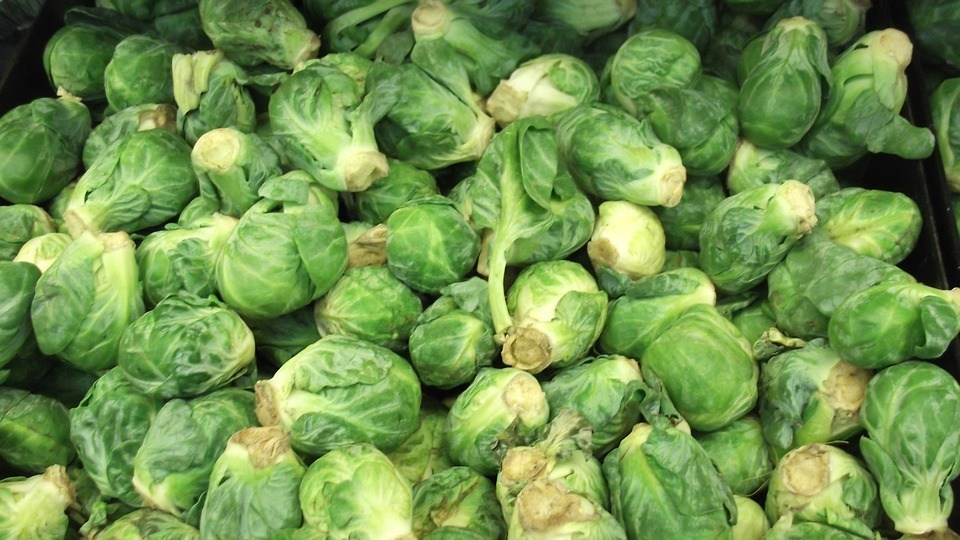 how to grow brussel sprouts - Brussels Sprouts