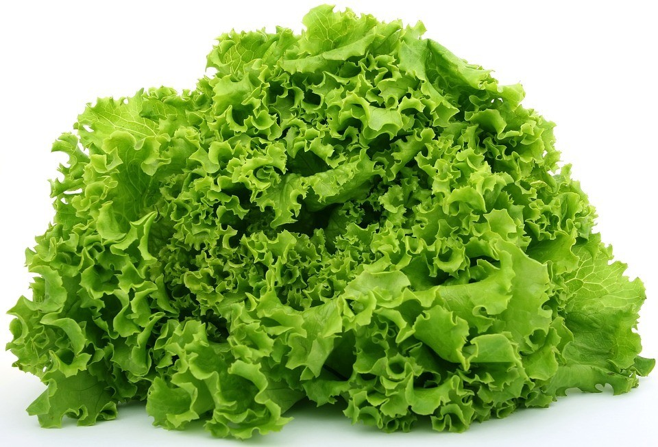 how to grow lettuce - lettuce vegetable