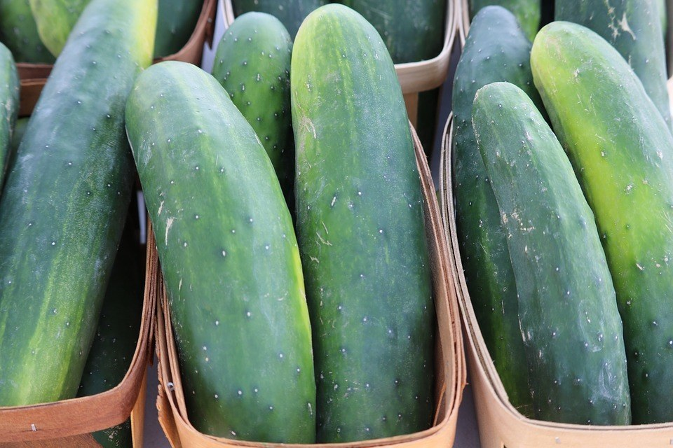 Cucumber in baskets