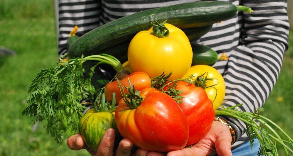 fresh veggies harvested from vegetable gardening