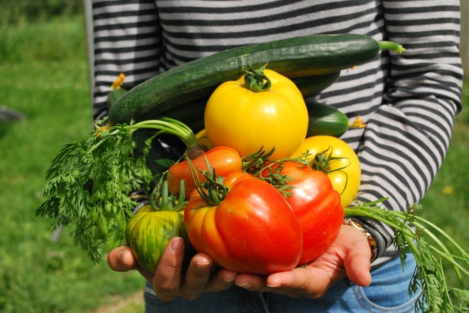 The Definitive Guide To Vegetable Gardening For Beginners