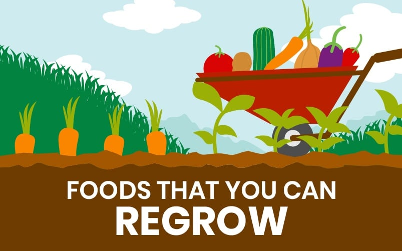 Foods that You Can Regrow