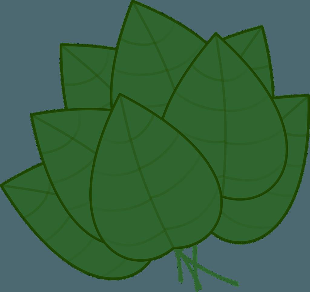 fresh green culinary herbs