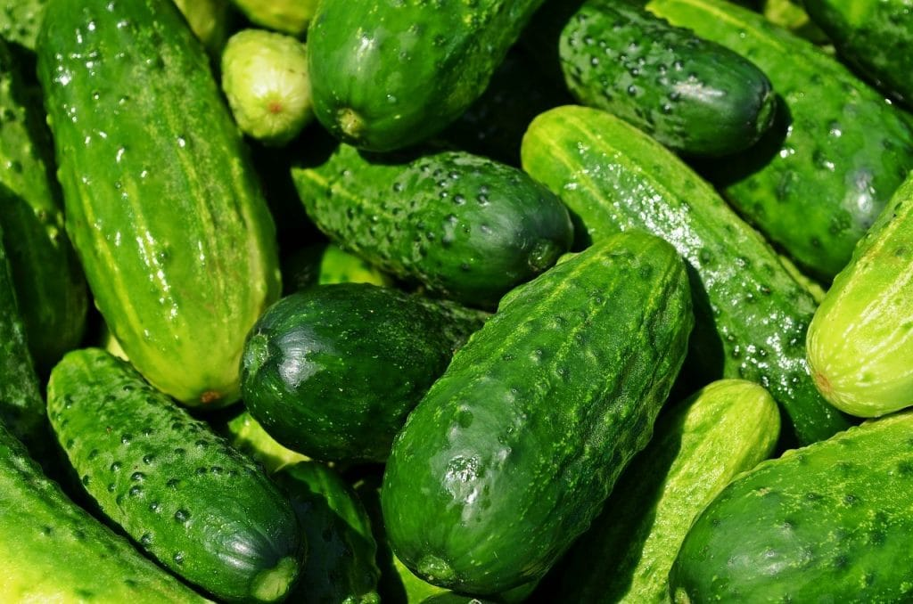 A bunch of cucumbers