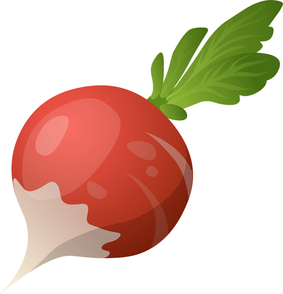 Red globe radish that can be planted on a vegetable garden