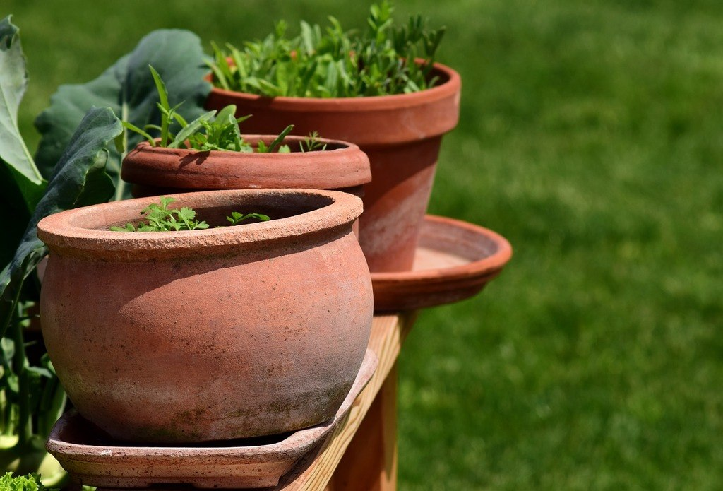 herbs and vegetable gardening planted in container pots for those with small spaces at home