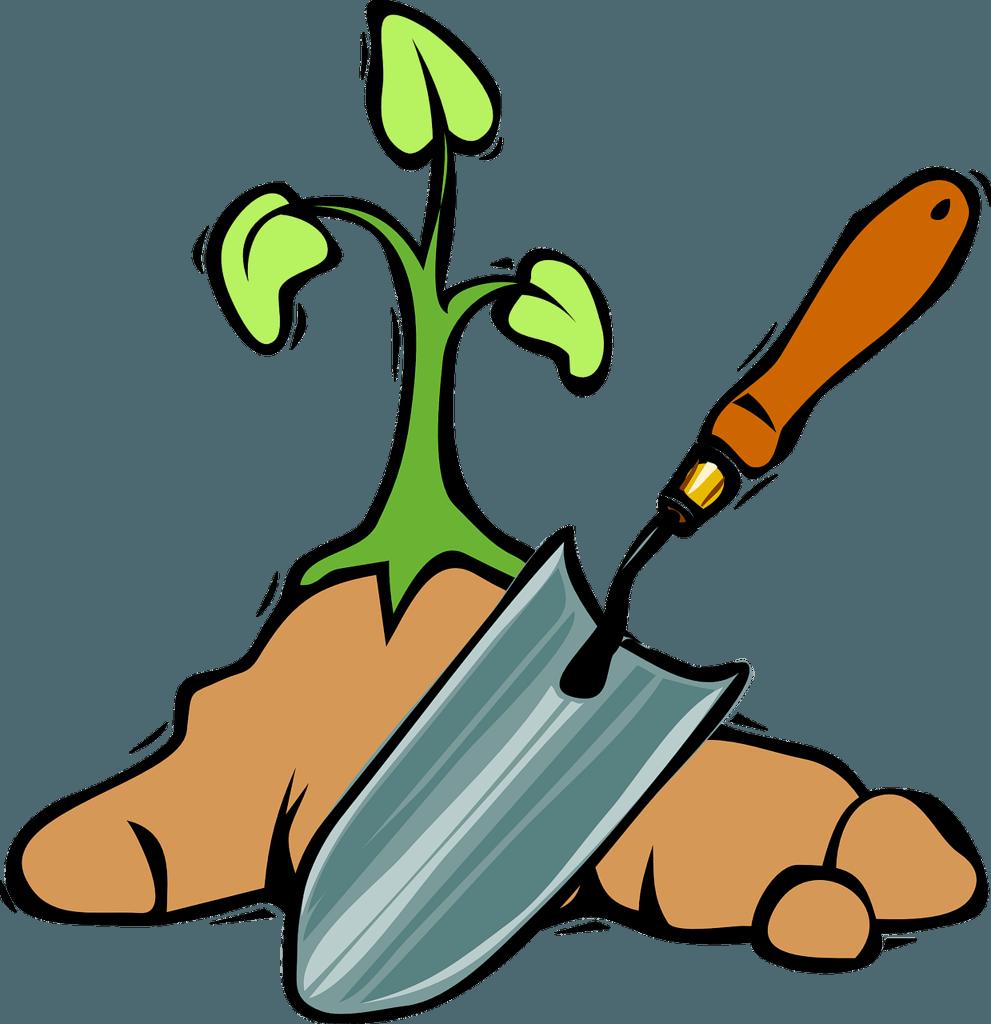 planting in a vegetable garden using seedlings