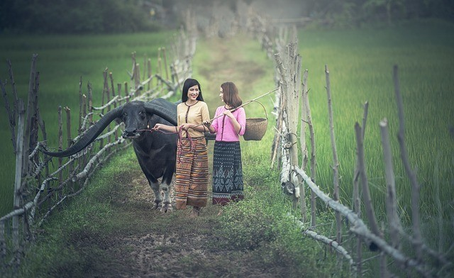 Photo of two woman and a carabao