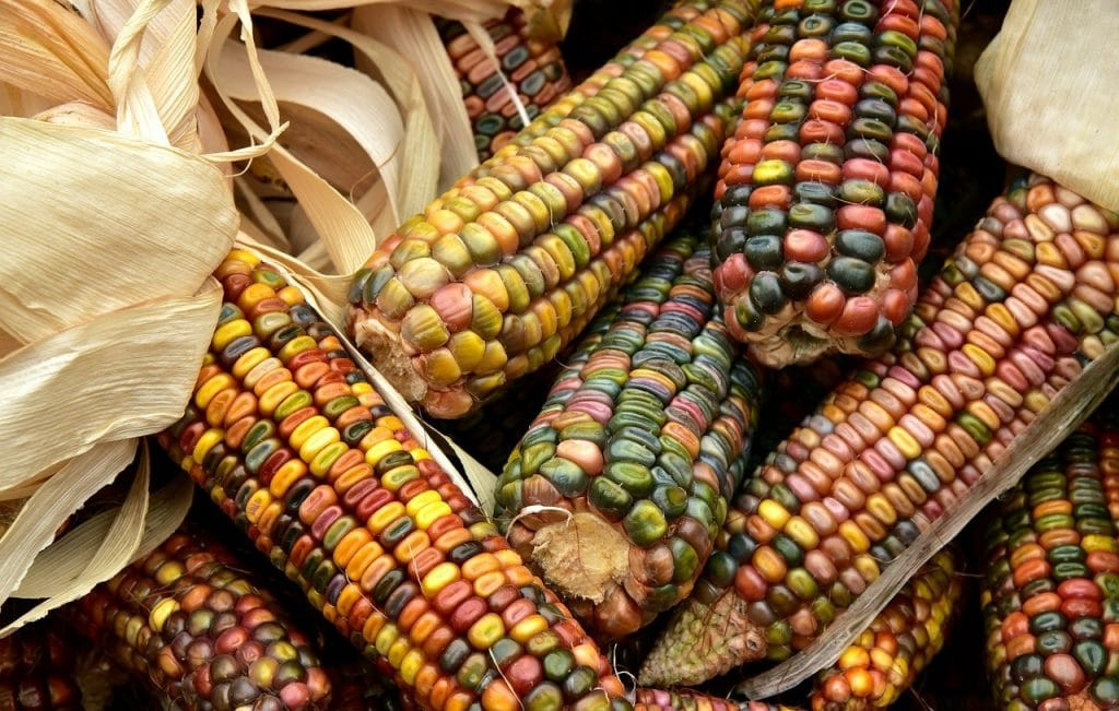 Photo of corns