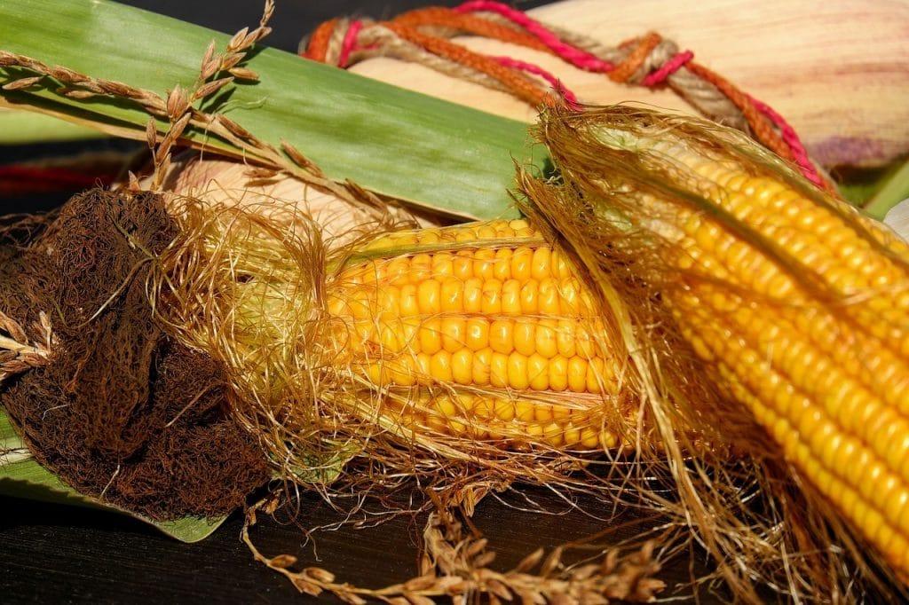 Photo of two corns