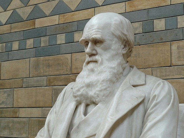 statue of Charles Darwin who used snapdragons on his studies on floral development