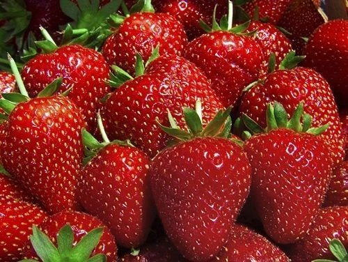 ever-bearing strawberries