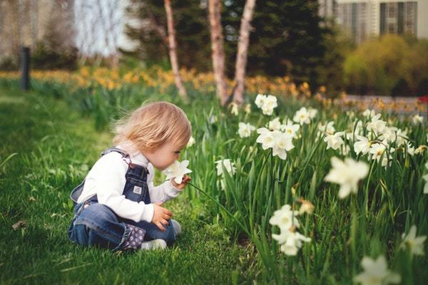 child smelling white daffodils